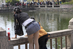 寺庙自由生活池塘  免版税图库摄影