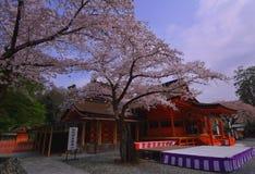 寺庙` FUJISAN HONGU SENGENTAISHA `富士宫市日本樱花  免版税库存照片