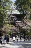 寺庙hanami 免版税库存图片