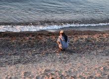 寻找在海滩的妇女玛瑙苏必利尔湖在日落 免版税库存照片