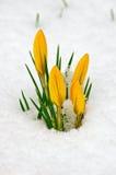 寻找春天 免版税库存照片