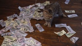 寻找的全部赌注美元 100美金人为老鼠  影视素材