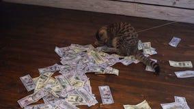 寻找的全部赌注美元 100美金人为老鼠  股票视频