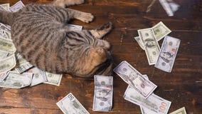 寻找的全部赌注美元 100美金人为老鼠  股票录像