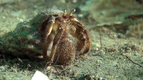 寻找食物的巨蟹星座隐士水下在巴伦支海 影视素材
