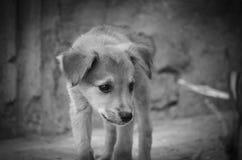 寻找食物的街道小狗 图库摄影