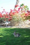 寻找鸡蛋的复活节兔子 库存图片
