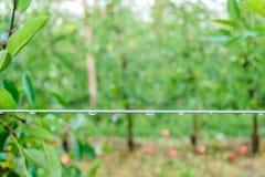 导线在果树园 库存照片