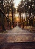 导致下来海的一个美丽的楼梯的老木步在杉木森林里在日落在立陶宛,克莱佩达 免版税库存照片
