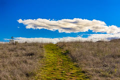 导致与空白松的云彩的展望期的绿色路径 库存图片
