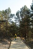导致从波罗的海海湾海滩的新的木路与白色沙子的有松树的沙丘森林 免版税库存照片