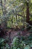导致对纪念十字架的足迹在森林里 免版税图库摄影