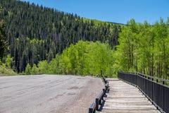 导致树美丽的景色的木道路在绿色颜色的  库存照片
