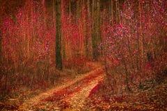 导致沿年轻桦树的森林的意想不到的自然痕迹 免版税库存图片