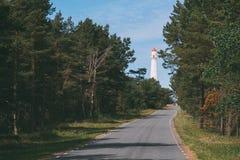 导致灯塔的路通过杉木森林 图库摄影