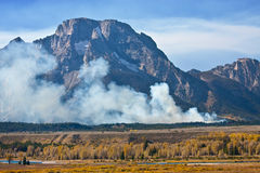 导致的火森林闪电 免版税库存照片