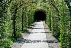 导致黑暗的出口的树豪华的绿色拱道  免版税图库摄影