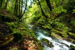 导致Loue的春天的美丽的河 库存图片