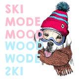 导航与关闭的海报拉布拉多猎犬狗画象  滑雪方式心情 小狗童帽、围巾和雪风镜 库存图片