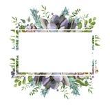导航与多汁花植物,莓果草本叶子的卡片设计 皇族释放例证