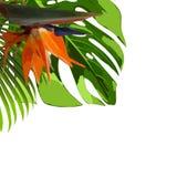 与棕榈树和叶子的热带密林背景. brander, 玻色子.图片