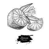 导航与花和叶子的手拉的柠檬或石灰果子在增殖比 皇族释放例证