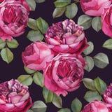 导航与水彩桃红色玫瑰的花卉无缝的样式