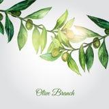 导航与绿色叶子和发光的微粒的水彩手拉的橄榄树枝背景 图库摄影