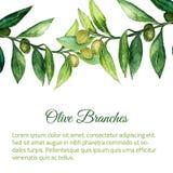 导航与绿色叶子的水彩手拉的橄榄树枝背景 库存照片