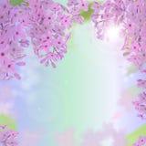 导航与紫色,桃红色,蓝色和白色淡紫色花的网横幅 库存照片