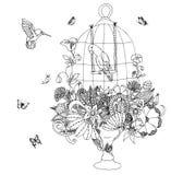 导航例证与鹦鹉的zentangle笼子,花 成人的彩图反重音 黑色白色 免版税库存照片