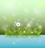 导航例证绿草和叶子有戴西、野花和阴影反射的在浅兰的水 库存图片