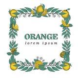 导航叶子和橙色果子手拉的方形的框架  鸟逗人喜爱的例证集合葡萄酒 商标模板 免版税库存照片