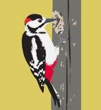 导航啄木鸟鸟的例证在树的 库存照片