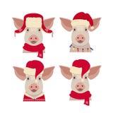 导航在冬天红色新年衣物的猪头 库存照片