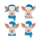 导航在冬天蓝色新年衣物的猪头 免版税库存图片