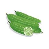 导航在白色背景隔绝的新鲜的黄瓜的例证 免版税图库摄影