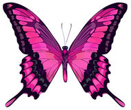 美丽的桃红色蝴蝶 图库摄影