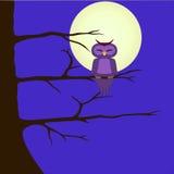 导航坐分支夜风景猫头鹰的图象 免版税库存照片