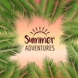 导航夏天海报构筑与在日落col的绿色棕榈叶 库存照片