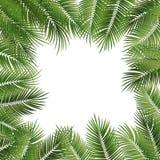导航夏天海报构筑与在白色后面的绿色棕榈叶 免版税图库摄影