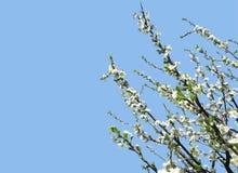 导航开花的苹果树的例证与大copyspac的 免版税库存照片