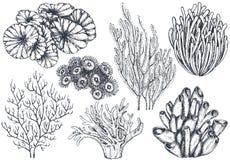 导航手拉的海洋植物和珊瑚礁元素的汇集 库存照片