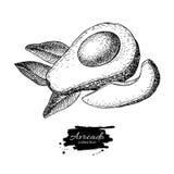 导航手拉的鲕梨、被切的片断和叶子 免版税图库摄影