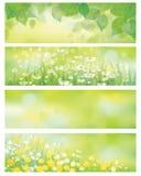导航春天自然横幅,桦树叶子, 图库摄影