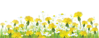 导航春天花、黄色春黄菊和dand 库存照片