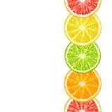 导航柑橘切片无缝的边界-石灰,葡萄柚,柠檬 库存图片