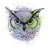 导航猫头鹰头剪影在色的斑点背景的  图库摄影