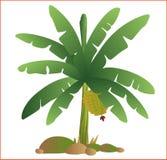 导航绿色香蕉树新鲜的自然庭院果子 免版税图库摄影