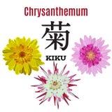 导航菊花的平的例证,日本的标志 库存照片
